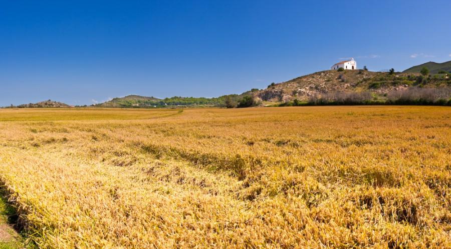 campos de arroz-14
