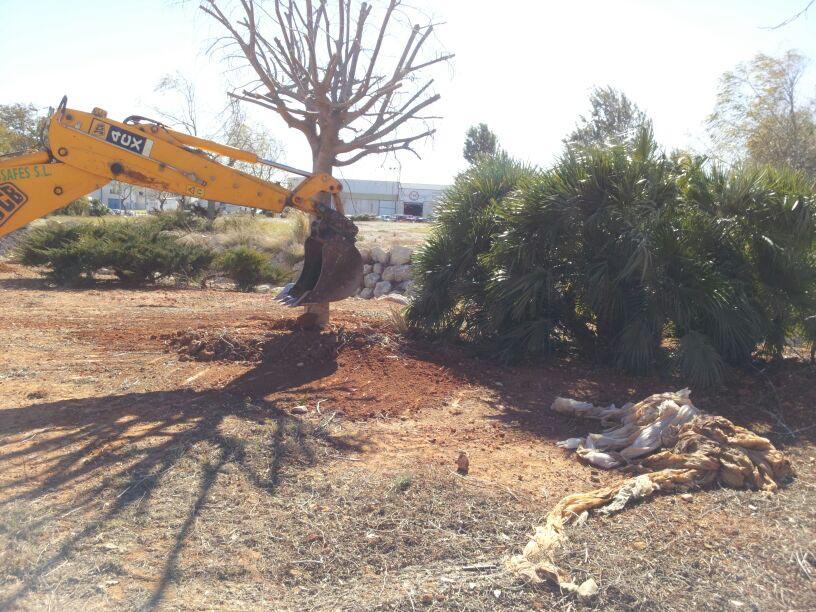 arbres av Foia2